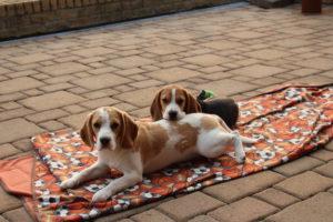 Gracie und Bonny ganz entspannt auf der Terrasse
