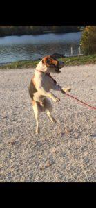 Hugo ist sehr sportlich